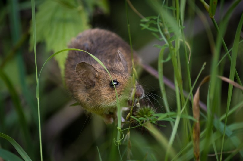 How to Get Rid of Mice in Your Backyard and Garden