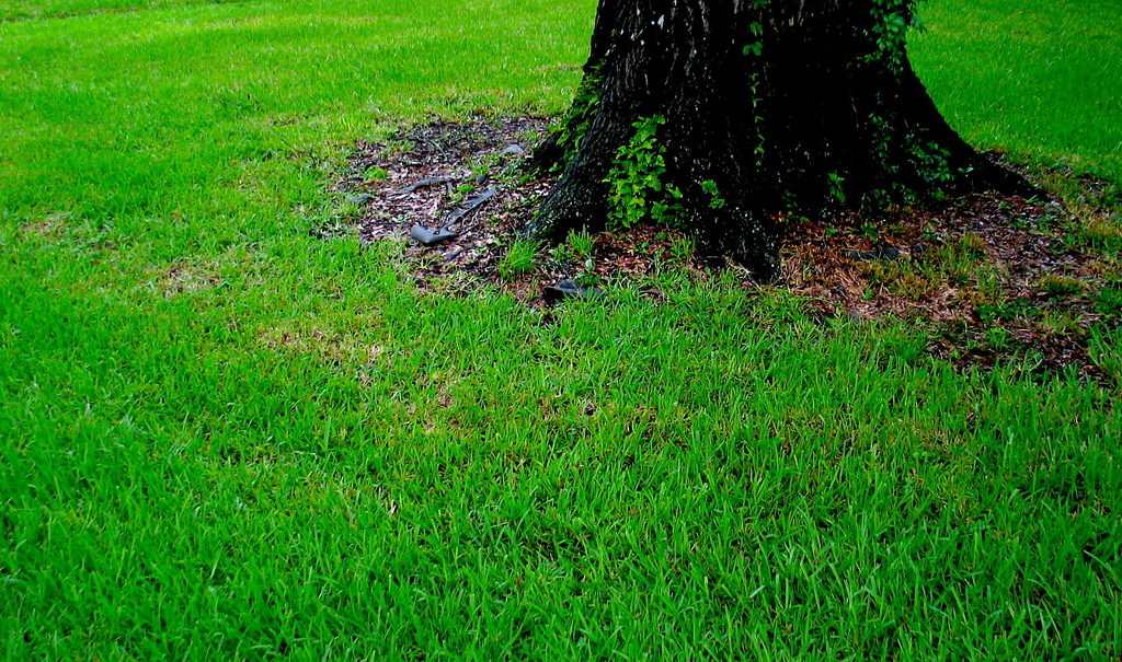 A Quick and Easy Guide to Fertilizing Your Lawn