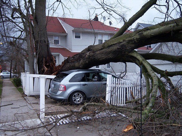4 Steps to Take After Storm Damage